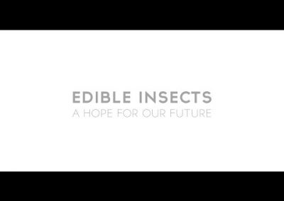 Edible insects a hope for our future